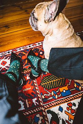 Französische Bulldogge sitzt bei Frauchen - p432m2053988 von mia takahara