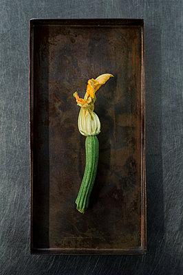 Zucchini flower - p947m2116566 by Cristopher Civitillo