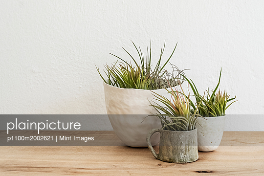 p1100m2002621 von Mint Images