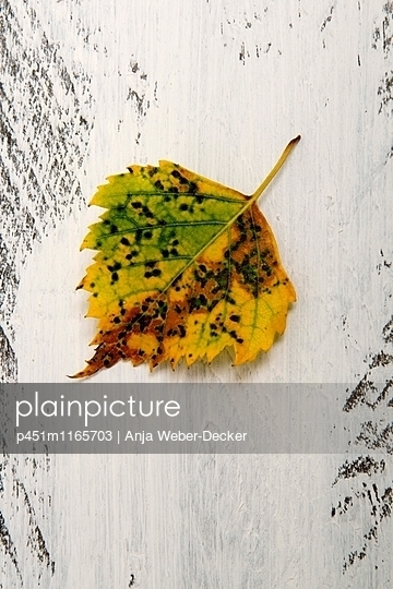 Herbstlaub - p451m1165703 von Anja Weber-Decker