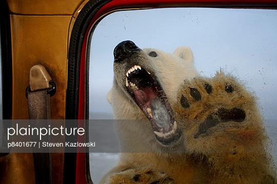 p8401677 von Steven Kazlowski