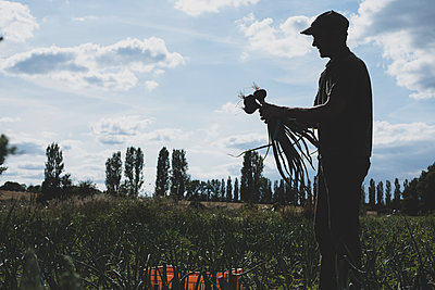 Farmer standing in a field holding freshly picked red onions. - p1100m2271502 by Mint Images