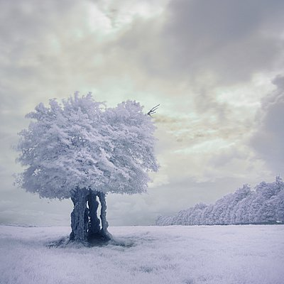 Infrared tree - p1137m932509 by Yann Grancher
