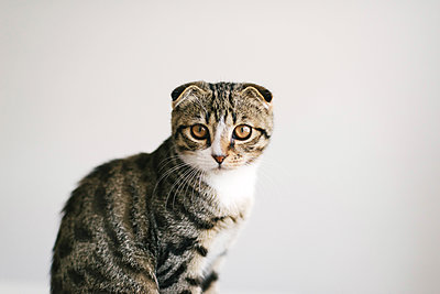 Low angle view of cat looking at camera,  on white background - p1166m2106849 by Cavan Images