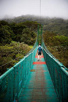 Selvatura Treetop hanging bridges, Monteverde Cloud Forest Reserve, Puntarenas, Costa Rica - p871m2032107 by Matthew Williams-Ellis