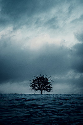 Single tree in winter at twilight - p879m2295217 by nico