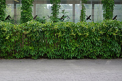 Green fence - p876m698400 by ganguin