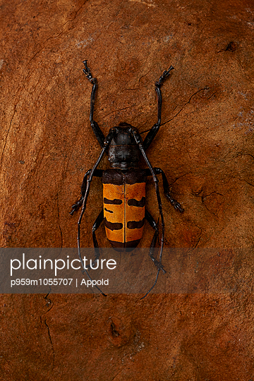 Afrikan Bug - p959m1055707 by Appold