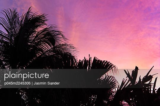p045m2245306 by Jasmin Sander