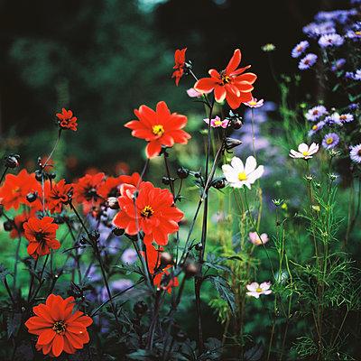 Blumenwiese - p1195m1195471 von Kathrin Brunnhofer