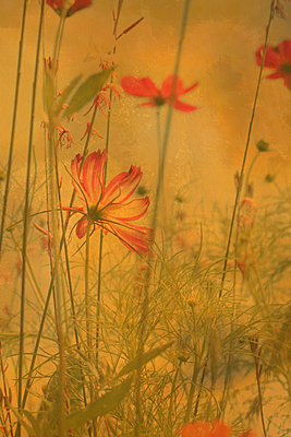 Red blossoms - p450m2211070 by Hanka Steidle
