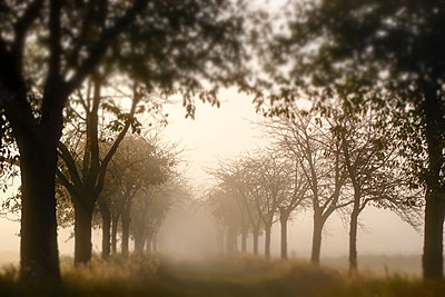 Avenue in the early morning mist - p739m1487194 by Baertels