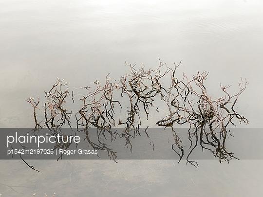 Wasserpflanzen - p1542m2197026 von Roger Grasas