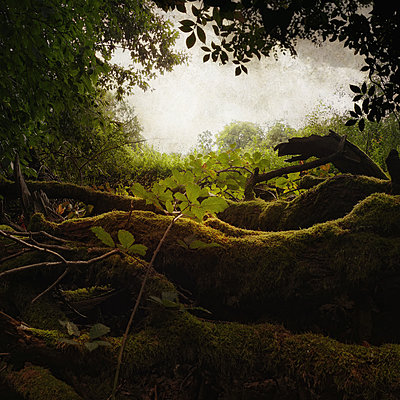 Aus dem Waldtagebuch - Tag 16 - p1633m2296843 von Bernd Webler