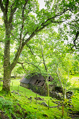 Old disused abandoned farmhouse building trees forest  - p609m2066422 by WALSH photography