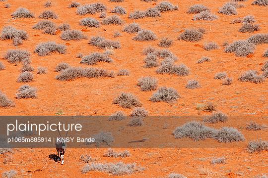 Oryx - p1065m885914 von KNSY Bande