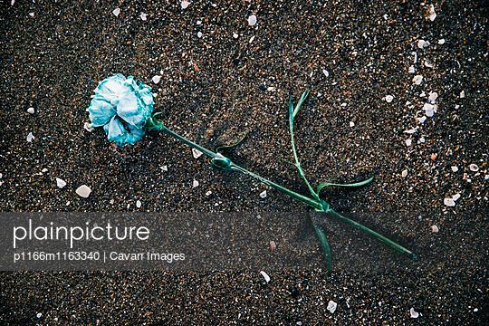 p1166m1163340 von Cavan Images