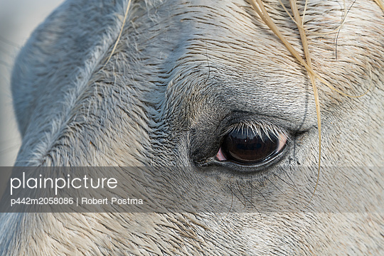 Close-up of the eye of a Camargue horse; Camargue, France - p442m2058086 by Robert Postma