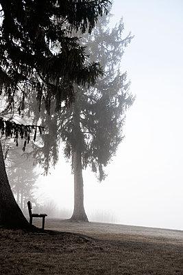 Morgennebel über dem See - p533m1589671 von Böhm Monika