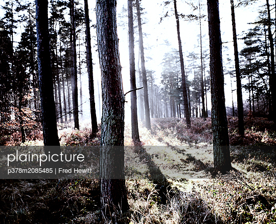 Trees-cannock - p378m2085485 by Fred Hewitt