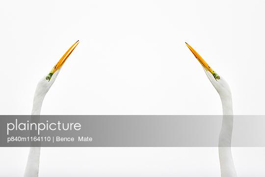 p840m1164110 von Bence  Mate