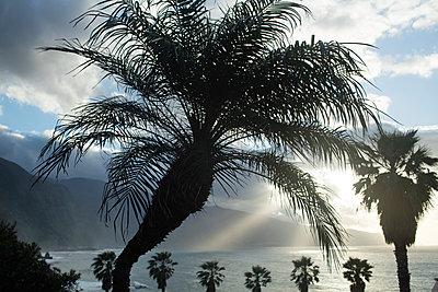 Atlantikküste auf Madeira - p1016m1137520 von Jochen Knobloch