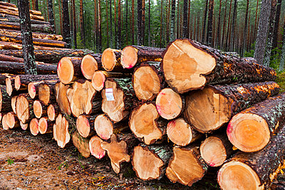 Cut logs at the edge of forest - p312m1570375 by Thomas Adolfsen