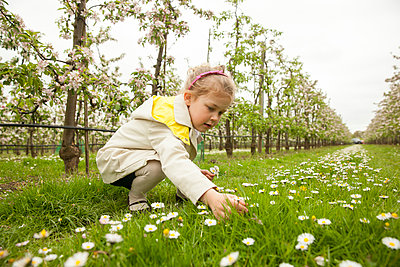 Picking flowers - p902m1021359 by Mölleken
