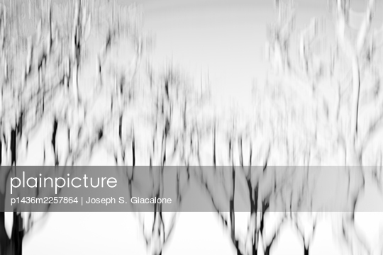 Impressionistic photograph of a group of trees. - p1436m2257864 by Joseph S. Giacalone