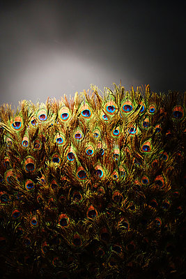 Peacock's feathers - p1189m1218635 by Adnan Arnaout