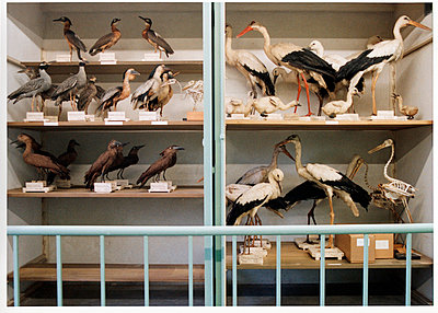 Vögel - p1205m1020925 von Annet van der Voort