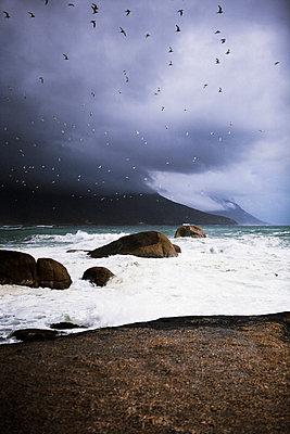 Birds flying over a stormy ocean - p31223701f by Susanna Blavarg