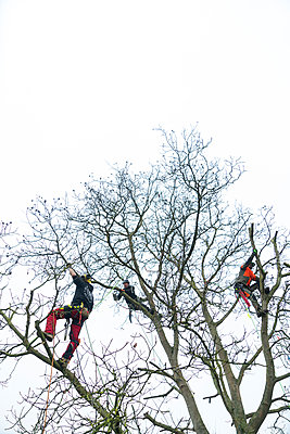 Tree climbers at work - p427m2272325 by Ralf Mohr