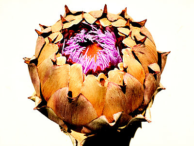 Artichoke - p551m1585103 by Kai Peters