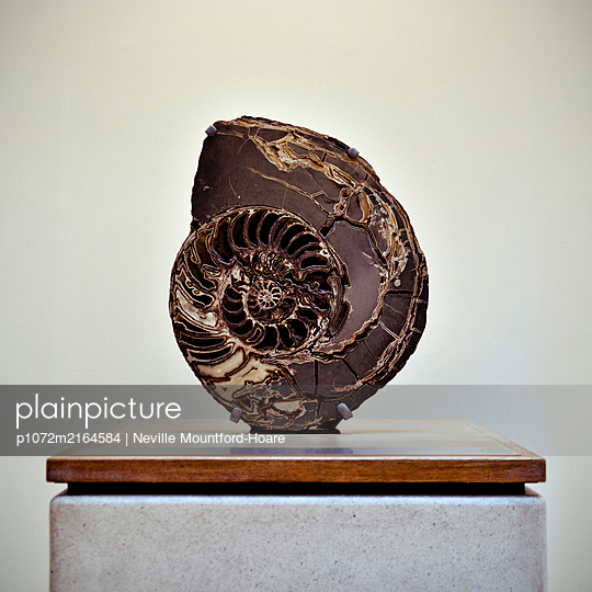 Large Ammonite in Museum - p1072m2164584 by Neville Mountford-Hoare