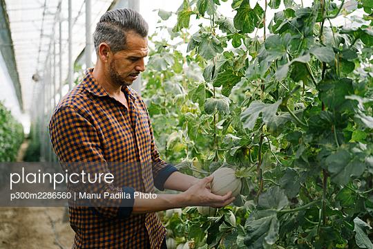 Almeria, Spain. farmer in a greenhouse growing and harvesting organic melons - p300m2286560 von Manu Padilla Photo