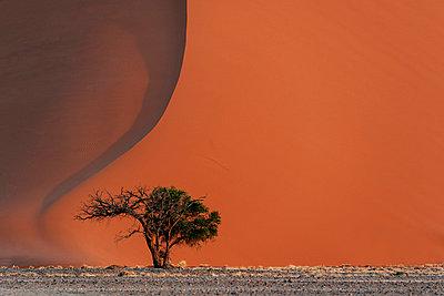 Einzelner Baum in der Wüste, Sossusvlei, Namibia, Afrika - p1065m982656 von KNSY Bande