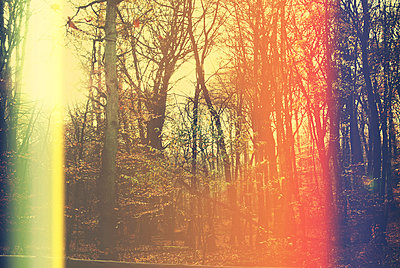 Herbstwald - p1089m856005 von Frank Swertz