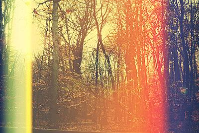 Autumn forest - p1089m856005 by Frank Swertz