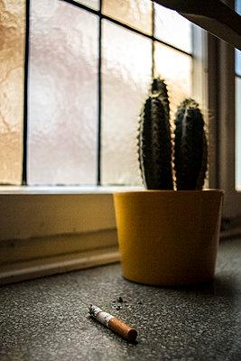 Zigarettenkippe vor Kaktus - p1611m2182613 von Bernd Lucka