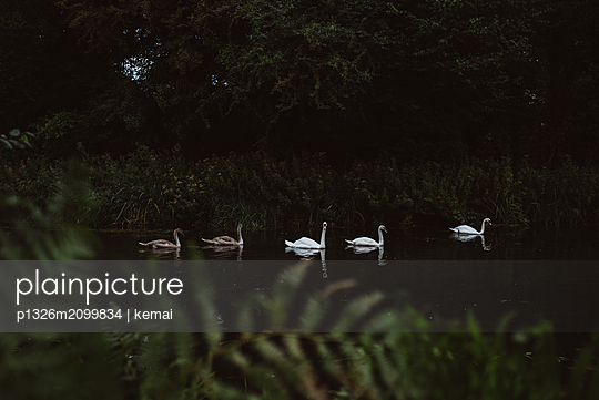 Five Swans - p1326m2099834 by kemai