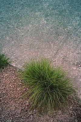 Grasbüschel wachsen zwischen Kies und Beton - p1255m2015622 von Kati Kalkamo