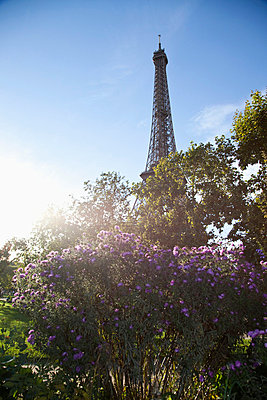 Wildflowers in front of the Eiffel Tower - p30118841f by Paul Hudson
