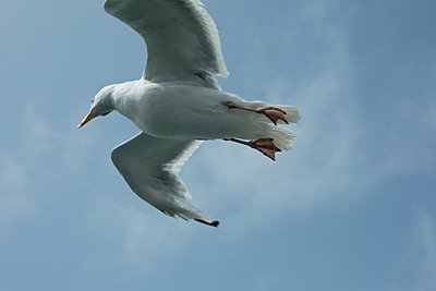 Seagull - p445m931924 by Marie Docher