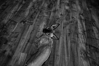 Nacktkatze - p858m1171235 von Lucja Romanowska