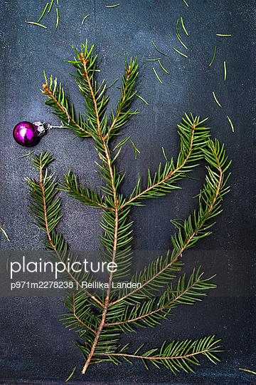 Fir branch  - p971m2278238 by Reilika Landen