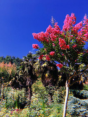 Garden in summer - p1189m2263797 by Adnan Arnaout