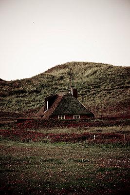 Verstecktes Reethaus in den Dünen - p248m952973 von BY