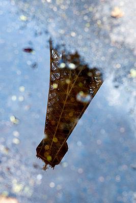 Eiffel Tower - p451m1048553 by Anja Weber-Decker
