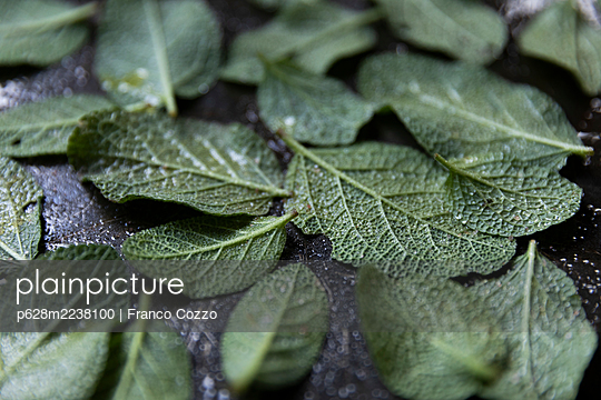 Sage in the pan - p628m2238100 by Franco Cozzo